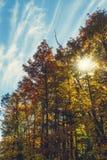 Floresta durante a queda Imagem de Stock Royalty Free