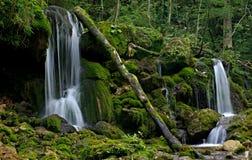 Floresta e água Imagem de Stock