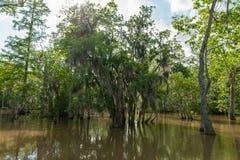 Floresta e árvore da selva de Honey Island Swamp Tour With em Nova Orleães, Louisiana imagens de stock