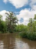 Floresta e árvore da selva de Honey Island Swamp Tour With em Nova Orleães, Louisiana fotografia de stock
