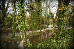 Floresta e árvores Fotografia de Stock Royalty Free