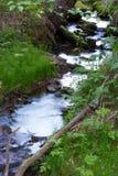 Floresta e angra Imagens de Stock Royalty Free