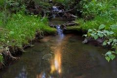 Floresta e angra Imagem de Stock Royalty Free