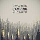 Floresta e animais selvagens acampando, selvagens Fotos de Stock