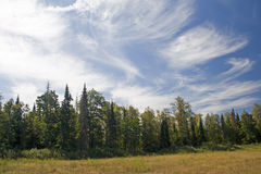 Floresta e céu Fotos de Stock