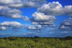 Floresta e céu Fotos de Stock Royalty Free