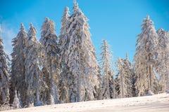 Floresta e céu azul foto de stock royalty free