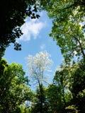 Floresta e céu na mola fotografia de stock royalty free