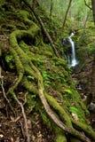 Floresta e cachoeira luxúrias densas fotos de stock