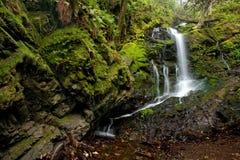 Floresta e cachoeira luxúrias densas Fotografia de Stock Royalty Free