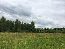 Floresta e campo Imagem de Stock Royalty Free