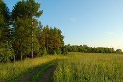 Floresta e campo Imagens de Stock Royalty Free