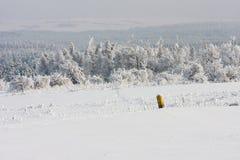 Floresta e campo no inverno Imagem de Stock Royalty Free