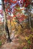 Floresta e cores do outono Foto de Stock