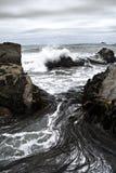 Floresta e disjuntores do Kelp Fotos de Stock