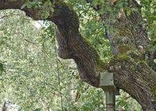 Floresta e fauna e plantas das madeiras fotos de stock