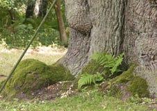 Floresta e fauna e plantas das madeiras imagem de stock royalty free