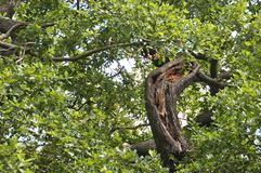 Floresta e fauna e plantas das madeiras fotografia de stock royalty free