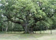 Floresta e fauna e plantas das madeiras imagem de stock