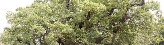 Floresta e fauna e plantas das madeiras foto de stock