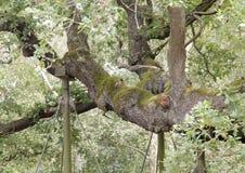 Floresta e fauna e plantas das madeiras imagens de stock