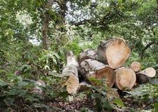 Floresta e fauna e plantas das madeiras fotos de stock royalty free