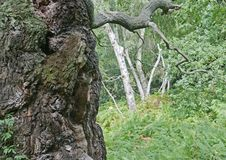 Floresta e fauna e plantas das madeiras fotografia de stock