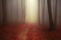 Floresta e fuga nevoentas do conto de fadas através das folhas Fotografia de Stock Royalty Free