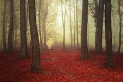 Floresta e fuga nevoentas do conto de fadas através das folhas Fotografia de Stock