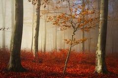 Floresta e fuga nevoentas do conto de fadas através das folhas Imagens de Stock