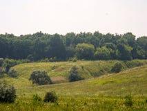 Floresta e gramado do verão Fotografia de Stock