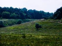 Floresta e gramado do verão Fotos de Stock