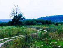Floresta e gramado do verão Imagens de Stock