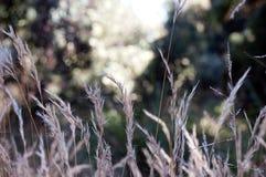 Floresta e gramas Fotos de Stock Royalty Free