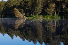 Floresta e lago Fotos de Stock