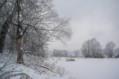 Floresta e lago do inverno Fotografia de Stock Royalty Free