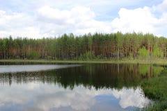 Floresta e lago do pinho Fotografia de Stock Royalty Free