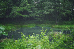 Floresta e lagoa Fotografia de Stock