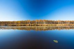 A floresta e a lagoa bonitas do vidoeiro no outono temperam Dia ensolarado, cle fotografia de stock