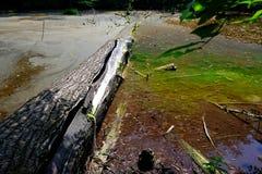 Floresta e lagoa da mola Imagens de Stock