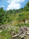 Floresta e madeira desperdiçada Fotos de Stock