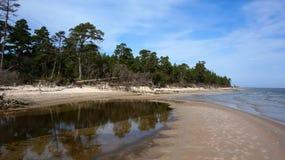 Floresta e mar Fotografia de Stock Royalty Free