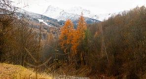 A floresta e a montanha Fotos de Stock