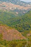 Floresta e montanha Imagens de Stock