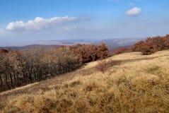 Floresta e montanha Fotografia de Stock Royalty Free