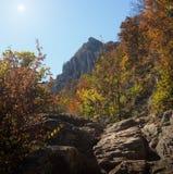 Floresta e montanha Imagens de Stock Royalty Free