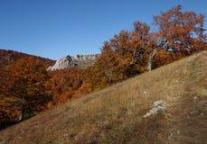 Floresta e montanha Fotos de Stock Royalty Free