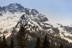 A floresta e a montanha de madeira do abeto ajardinam com neve Imagens de Stock