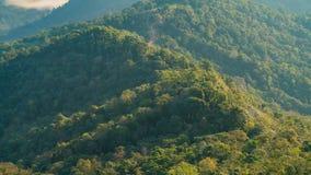 Floresta e montanha no verão vídeos de arquivo