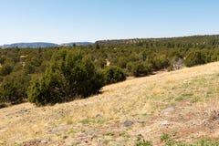 Floresta e montanhas Fotografia de Stock